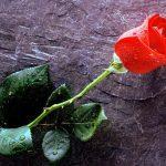 Rosas y espinas. Sobre aceptación, responsabilidad y libertad
